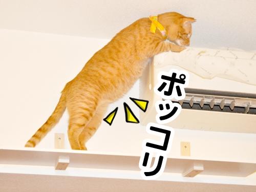 の たるみ 猫 お腹 の 猫のお腹のたるみは肥満が原因ではない?!実はかっこいい名前がついているだ!