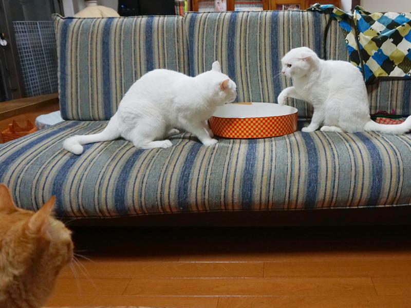 ミシン中は針やハサミ、糸くず等危ない道具が散らかっているので猫達が喧嘩で走り回るのは止めて欲しいところ。