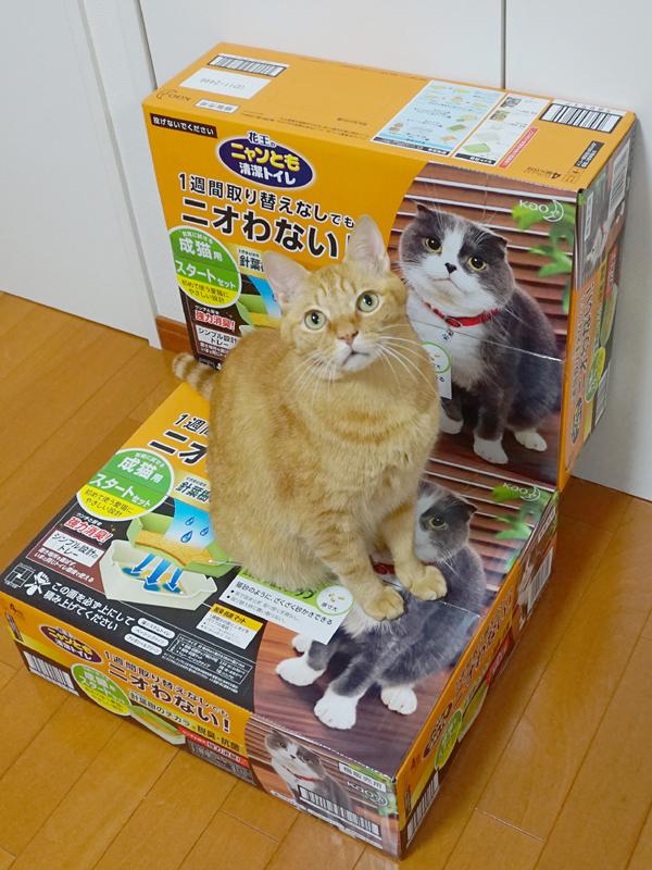 猫 トイレ シート