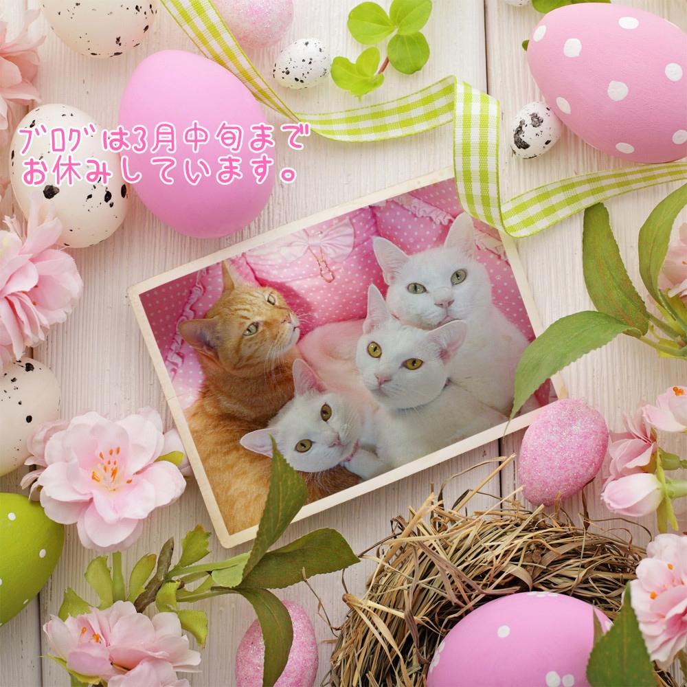 PhotoFunia-1550877766