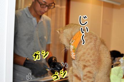 DSC_0059_20120725115155.jpg